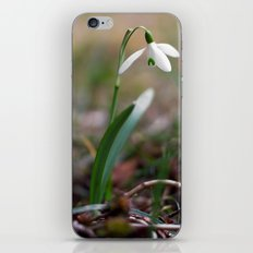 Snowdrop -  Spring Flower Nature Macro Photography iPhone & iPod Skin