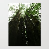 Redwoods #2 Canvas Print