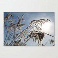 Winter Sun Canvas Print