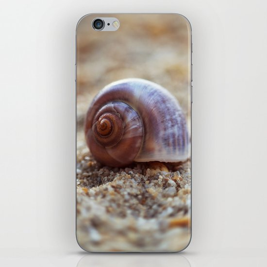 Seashell iPhone & iPod Skin