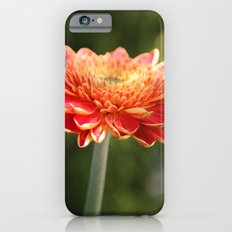Gerbera Daisy Slim Case iPhone 6s