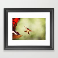 The Hummingbird Framed Art Print