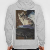 The Magnificent Ascent of the Mighty Bear (the Ragdoll Cat) Hoody