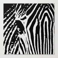 Zebra B&W Canvas Print