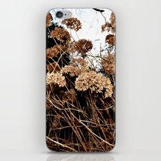 bronze iPhone & iPod Skin