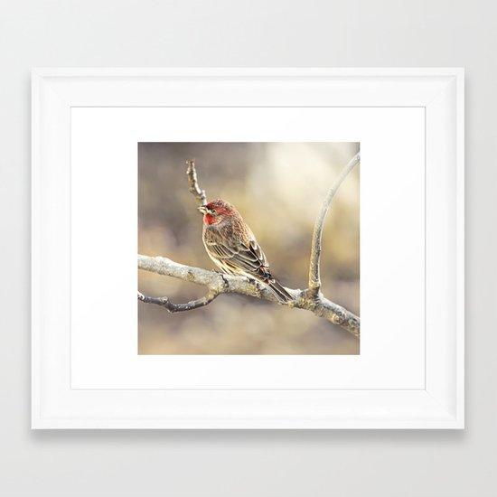 Rosy Little Finch Framed Art Print