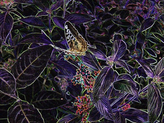 Butterfly Fairy Art Print