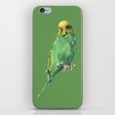 Budgie, parakeet, budgerigar,bird art, budgie painting iPhone & iPod Skin