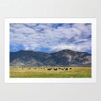 Field of Cows Art Print