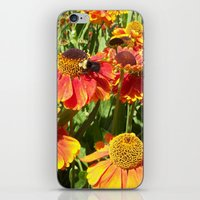 Sweet As A Bee And Daisi… iPhone & iPod Skin
