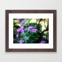 Geraniums Framed Art Print