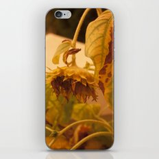 The Sun has Set and tomorrow, God willing, it will rise again [SUNFLOWER] [WILTING] [YELLOW SKY]  iPhone & iPod Skin