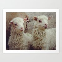 Sheep #3 Art Print