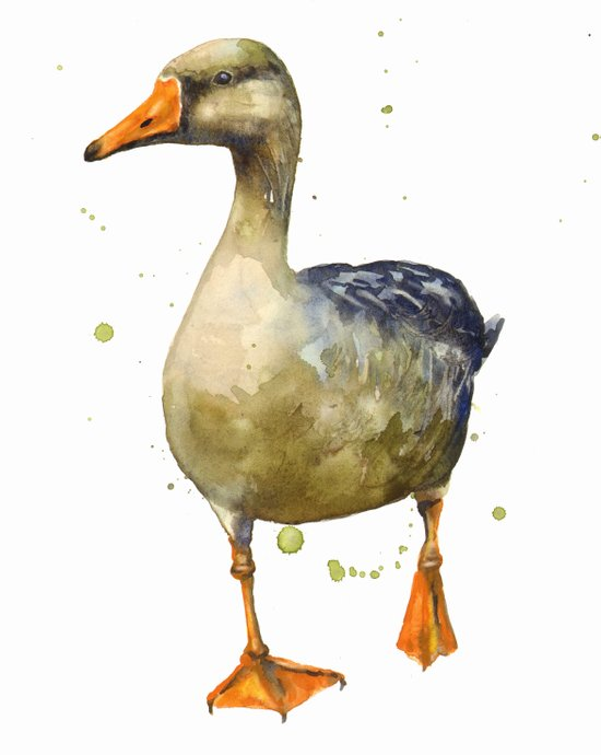 Goose, golden goose, goosey goosey gander, fowl art, farmyard animals, kitchen wall art Art Print