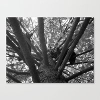 Hullo Canvas Print