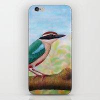 Fairy Pitta iPhone & iPod Skin