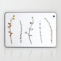 Indoor Garden Laptop & iPad Skin