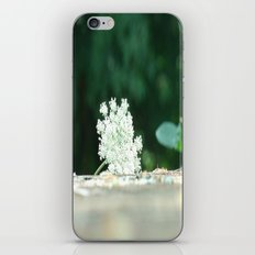 Queen Anne's Lace w/ bokeh iPhone & iPod Skin