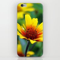 Prairie Flower iPhone & iPod Skin