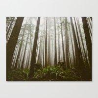 Rainforest Of The Pacifi… Canvas Print