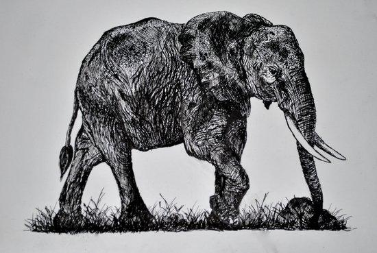 Pen & Ink Elephant Art Print