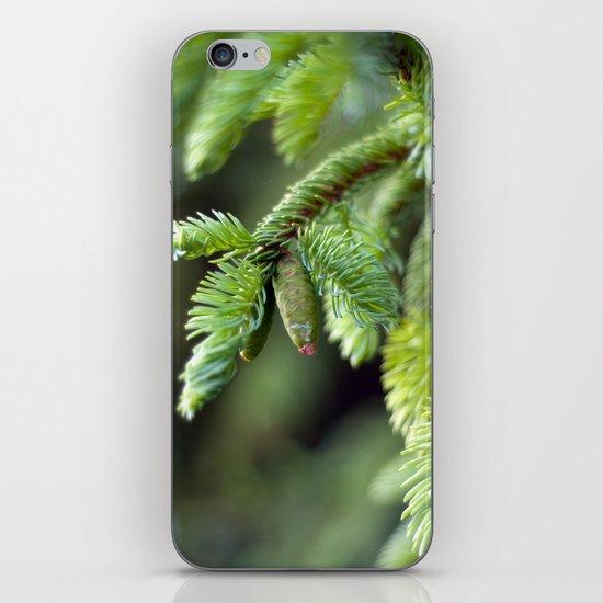 Baby Pine Cone iPhone & iPod Skin