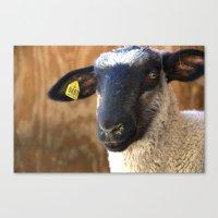 Lamb #0487 Canvas Print