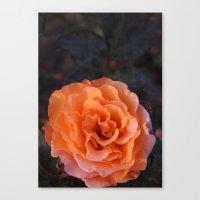 Holland Park Rose Canvas Print