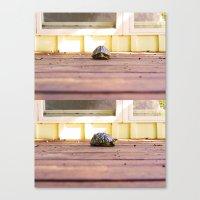 Mugshot Turtle Canvas Print