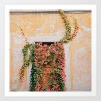 Green & Orange Ivy - Trastevere, Italy Art Print