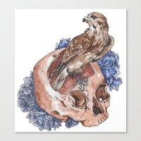 Hawk And Skull Canvas Print