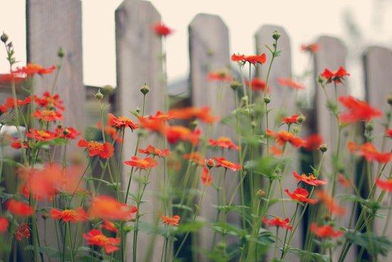flowery fence Art Print