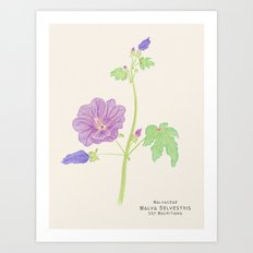 Botanical Sketches 5: Common Mallow Art Print