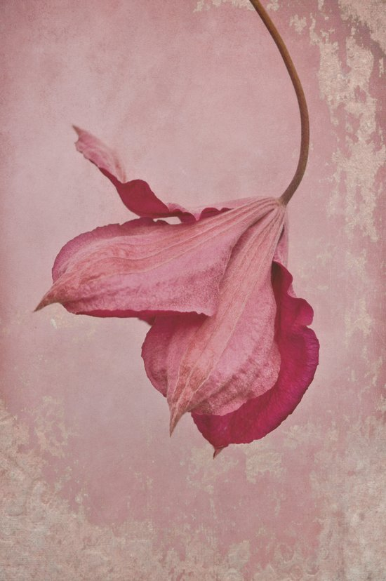 antique pink Art Print