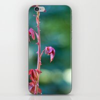 Baby Rose Leaves iPhone & iPod Skin