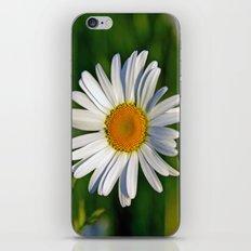Giant Daisy iPhone & iPod Skin