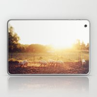 Pig Dust Laptop & iPad Skin