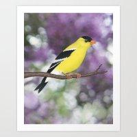 American goldfinch male bokeh Art Print
