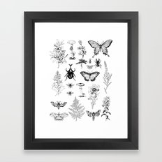 Naturalist Framed Art Print