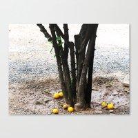 Roots/Fruits Canvas Print