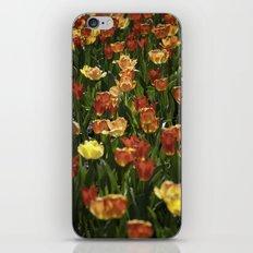 A sea of spring tulips iPhone & iPod Skin
