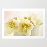Hellebores In Blue Jug Art Print