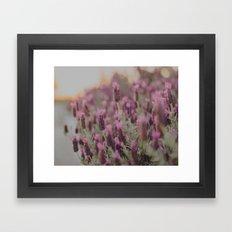 Lavender Stories Framed Art Print