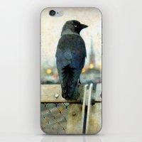 City bird iPhone & iPod Skin
