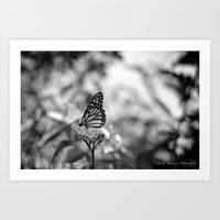 Papillion En  Noir Art Print