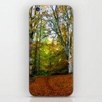 Autumn Trees Woodland iPhone & iPod Skin