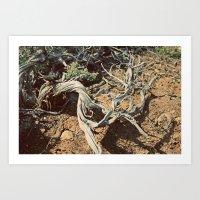 Desert spirit Art Print