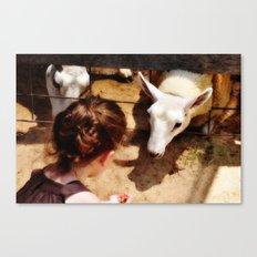 Girl Feeds Sheep Canvas Print
