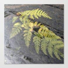 fern leaf XVI Canvas Print