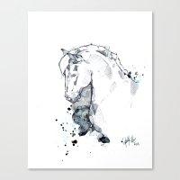 Horse Study I Canvas Print
